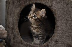 Een nieuwsgierig katje Royalty-vrije Stock Foto