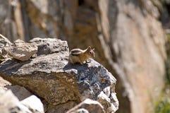 Een nieuwsgierige aardeekhoorn hoog in de berg stock fotografie
