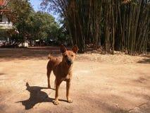 Een nieuwsgierige hond Stock Foto's