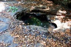 Een oase in bos Royalty-vrije Stock Afbeelding
