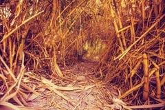 Een oase in de woestijn Een tunnel in het bamboestruikgewas royalty-vrije stock foto