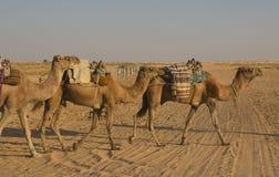 Een oase in de woestijn van de Sahara Royalty-vrije Stock Foto's