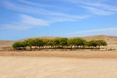 Een oase in een woestijn stock foto
