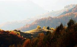 Een oase van licht in het midden van de herfst Royalty-vrije Stock Fotografie