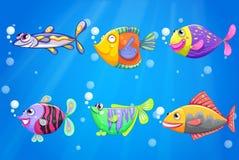 Een oceaan met zes kleurrijke vissen Royalty-vrije Stock Foto