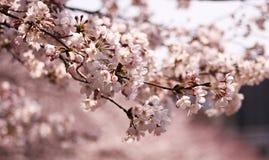Een ogenblik van de lente Stock Fotografie