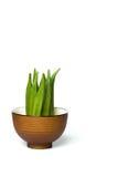 Een okra in een kom Royalty-vrije Stock Afbeelding