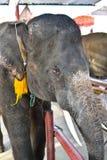 Aziatische olifant in Thailand Royalty-vrije Stock Foto's