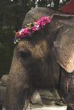 Een olifant die een bloemkroon in een dierentuin dragen Royalty-vrije Stock Fotografie