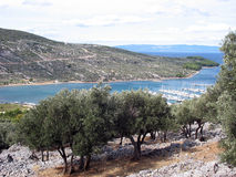 Een olijfboomplantage Royalty-vrije Stock Afbeeldingen