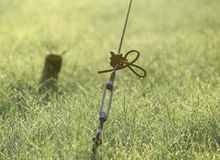Een Omheining en Grassen met Mooie Dauwdalingen Stock Afbeelding