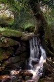 Een onaangeroerde stroom door Keniveil Stock Foto