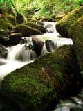 Een onaangeroerde stroom door Keniveil Stock Foto's