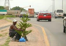 Een onbekende mens verkoopt levende Kerstboom op de weg. Royalty-vrije Stock Afbeeldingen
