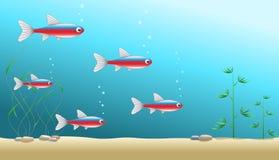 De achtergrond van het aquarium met een shaol van hoofd tetra Royalty-vrije Stock Afbeeldingen