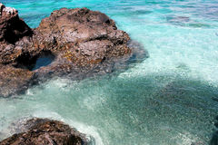 Een ondiepte van vissen met rots in duidelijk water Stock Foto