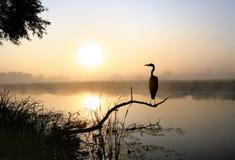 Een ongeveer reiger, een mist en een zonsopgang stock foto's