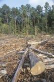 Een ontruimd gebied van timmerhout royalty-vrije stock fotografie