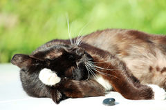 Een ontspannen kat die op groen gras leggen Royalty-vrije Stock Foto's