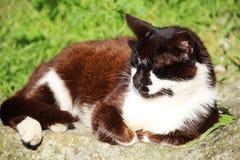 Een ontspannen kat die op groen gras leggen Stock Foto
