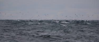 Een onweer op zee Stock Foto's