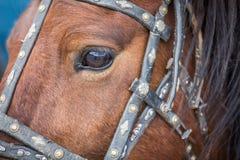 Een oog Royalty-vrije Stock Afbeeldingen