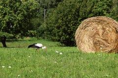 Een ooievaar en een hooiberg dorp Daglicht De zomerfotografie stock afbeelding