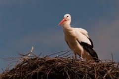 Een ooievaar op het is nest stock foto