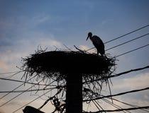 Een ooievaar in zijn nest stock foto's