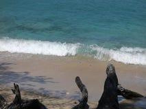 Een oorspronkelijk strand in de Caraïben stock videobeelden