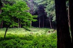 Een opheldering in het bos royalty-vrije stock fotografie