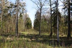 Een opheldering in het bos royalty-vrije stock foto's