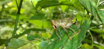 Een opschepperig insect Stock Foto