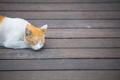 Een oranje en witte kattenslaap op houten vloer royalty-vrije stock afbeelding