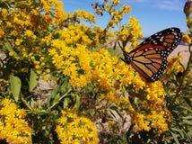 Een oranje en zwarte vlinder rust op een vlaag van gouden bloemen royalty-vrije stock foto's