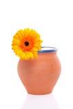 Een oranje gerbera in een vaas Stock Foto's