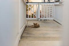 Een oranje kat rust op de portiek van een huis met een lui gezicht royalty-vrije stock fotografie
