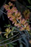 Een Oranje wilde orchidee Stock Fotografie