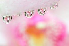 Een orchidee wordt weerspiegeld in waterdalingen Royalty-vrije Stock Foto's