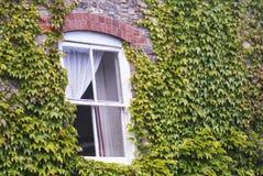 Een Oud die Venster door Ivy Leaves wordt omringd Stock Afbeelding