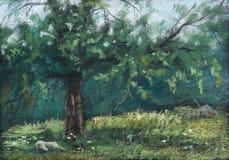 Een oude appelboom in de ochtendzon Royalty-vrije Stock Foto's