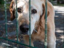 Een oude bastaarde hond kijkt droevig door de rooster van een dierlijke schuilplaats royalty-vrije stock afbeeldingen