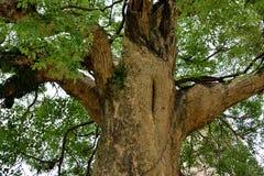 Een oude boom Royalty-vrije Stock Foto's
