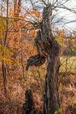 Een oude boom Stock Foto's