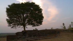 Een oude boom die de ruïnes bewaakt stock videobeelden