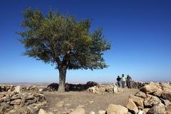 Een oude boom in Gobekli Tepe dichtbij Sanilurfa in oostelijk Turkije stock foto