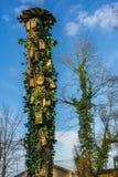 Een oude boom met vele vogelhuizen in zonneschijn royalty-vrije stock fotografie