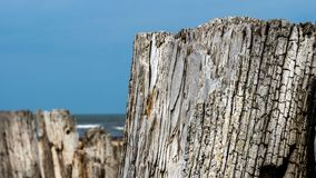 Een oude boomstam door het overzees royalty-vrije stock afbeeldingen