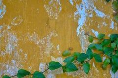 Een oude concrete muur en bladeren van boom Royalty-vrije Stock Afbeelding