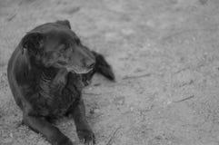 Een oude hond die in het vuil leggen stock foto's